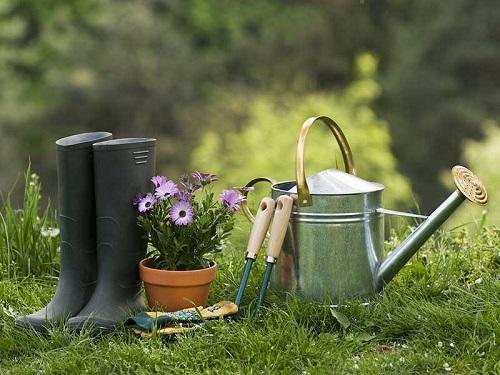 Comment sauvegarder la biodiversité de nos jardins ?