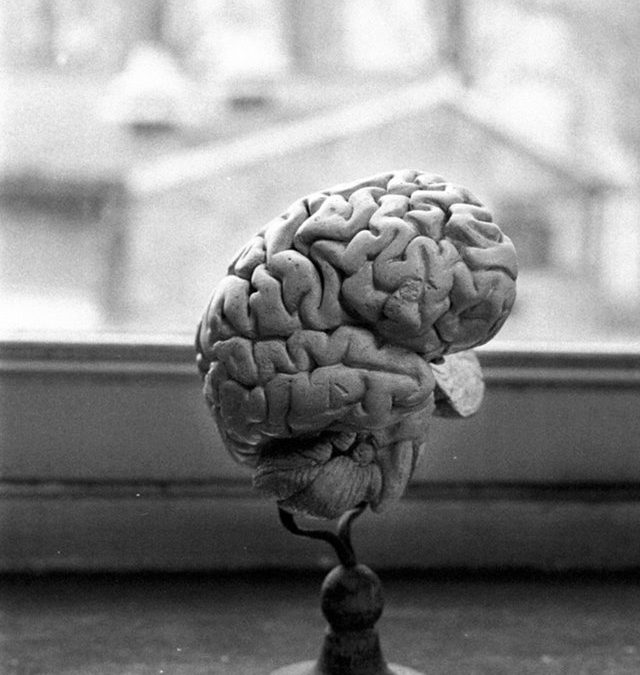 C'est la semaine du cerveau à l'Université de Liège