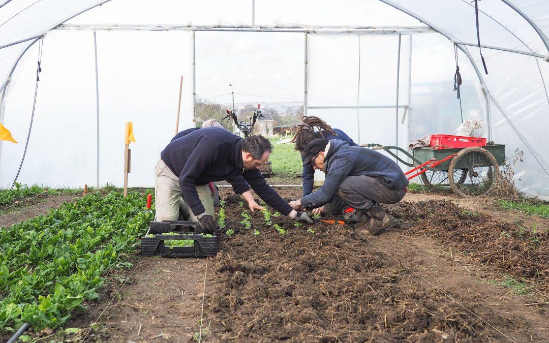 La Ville cherche des candidats pour développer une agriculture urbaine professionnelle