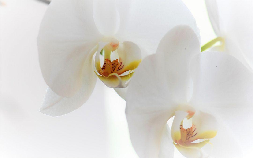 Agenda ► Rempotons nos orchidées