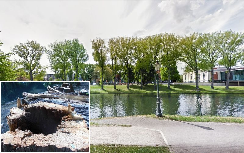 Abattage des 11 arbres de la Boverie: beaucoup de réactions