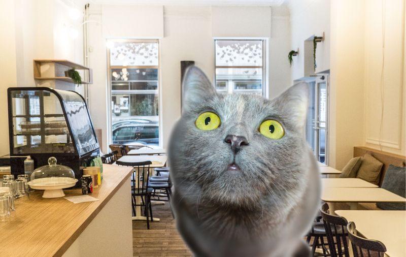 Polémique autour du premier bar à chats de Liège