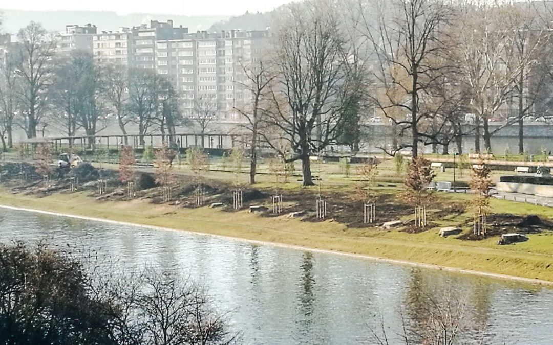 14 chênes ont été replantés à la place des peupliers parc de la Boverie