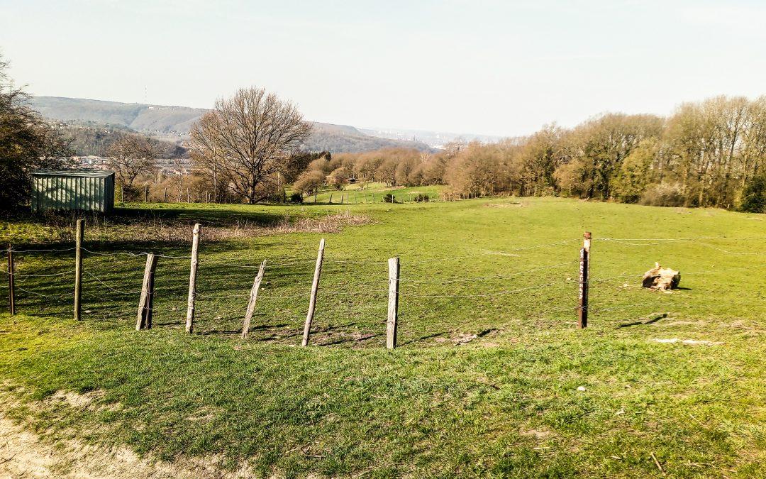 Vert Ardent demande un moratoire pour préserver les espaces verts à Liège