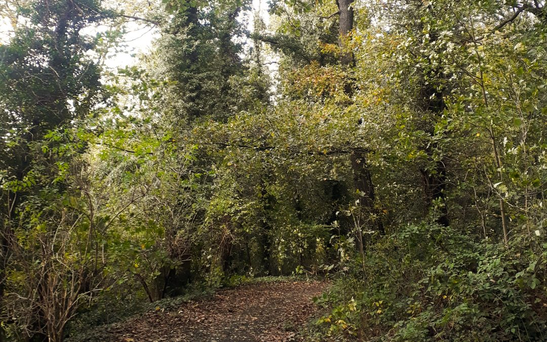 Cointe: plus de 1000 arbres menacés par un projet immobilier boulevard Kleyer