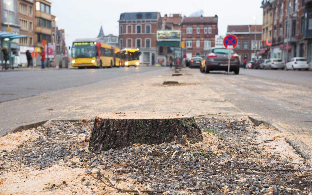 Tous les arbres de la place Général Leman ont été rasés