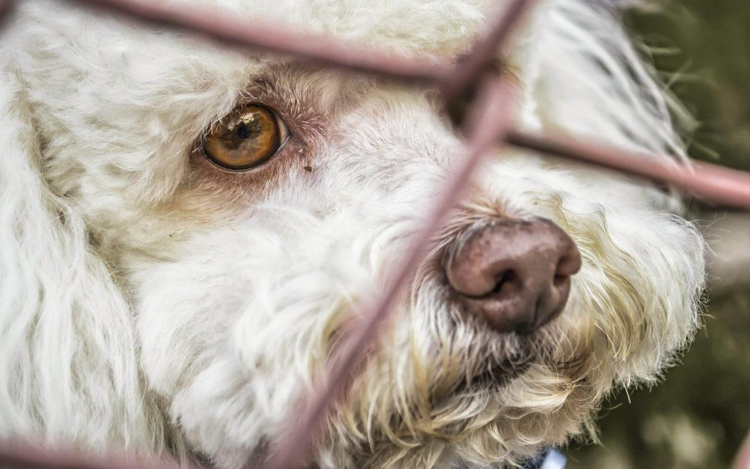 Jusqu'à 10.000€ d'amende pour les atteintes au bien-être animal