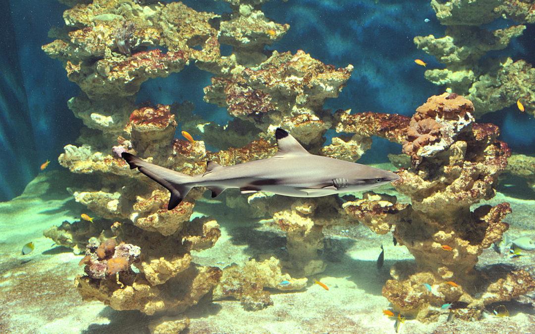 L'Aquarium et la Maison de la Science à nouveau ouverts