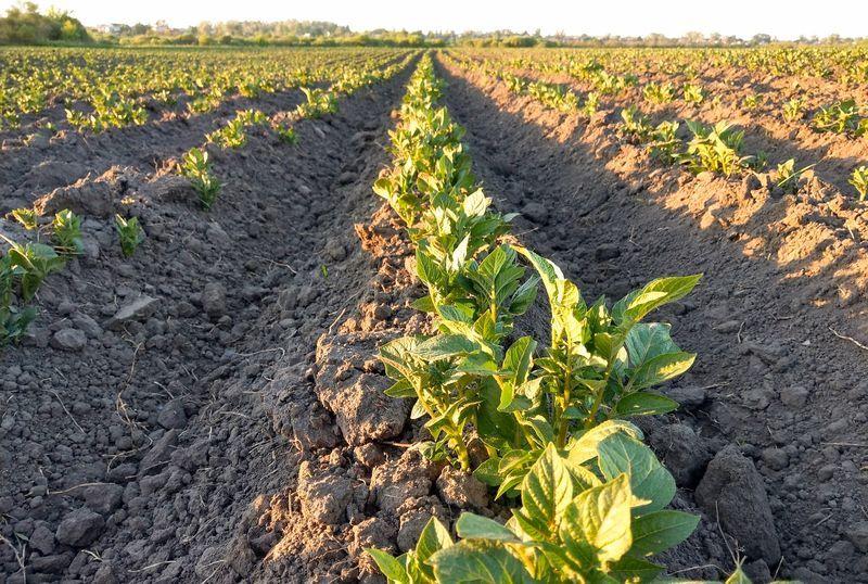 16% des fermes de la province de Liège ont opté pour le bio dont le succès se confirme