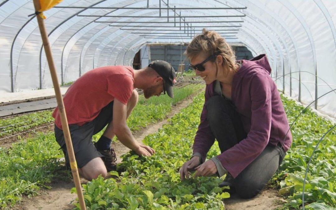 Deux jeunes maraîchers se lancent dans l'agriculture de proximité à Sainte-Walburge