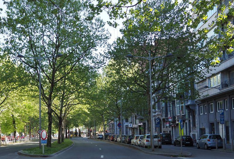 Liège lance son plan Canopée et veut planter plus de 20.000 arbres d'ici 2030