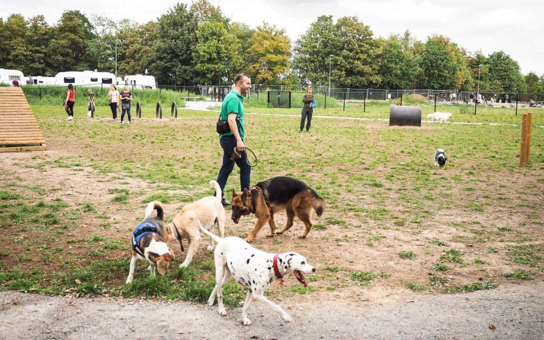 Les chiens sont déjà wouf du premier parc canin liégeois de Cointe
