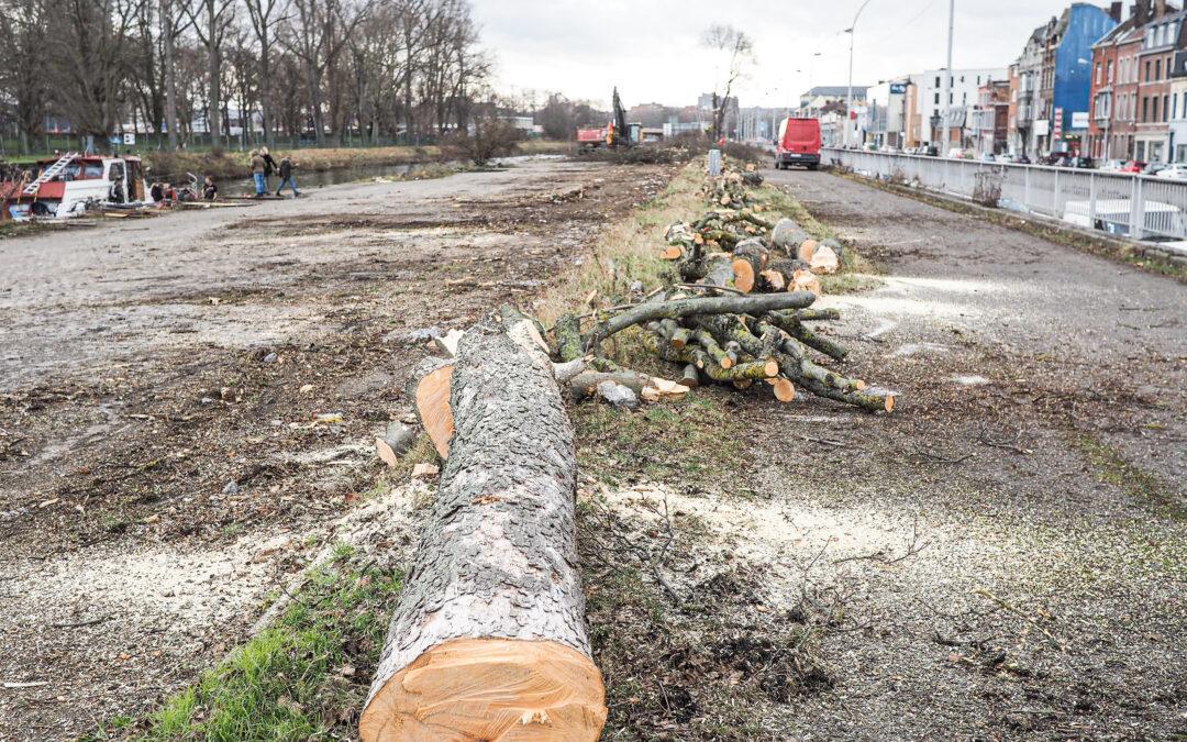 27 arbres abattus pour pouvoir construire le nouvel éco-quartier de Coronmeuse