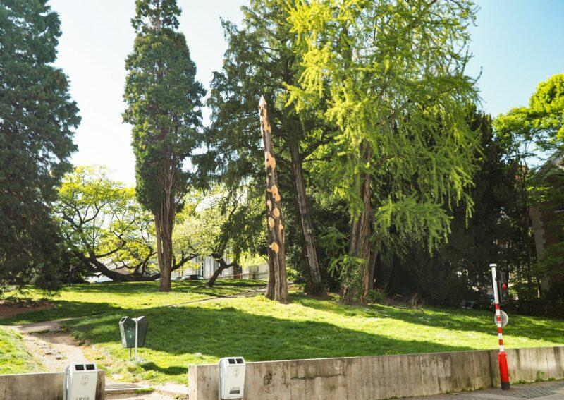 Les cheminements du parc du Jardin Botanique vont être refaits