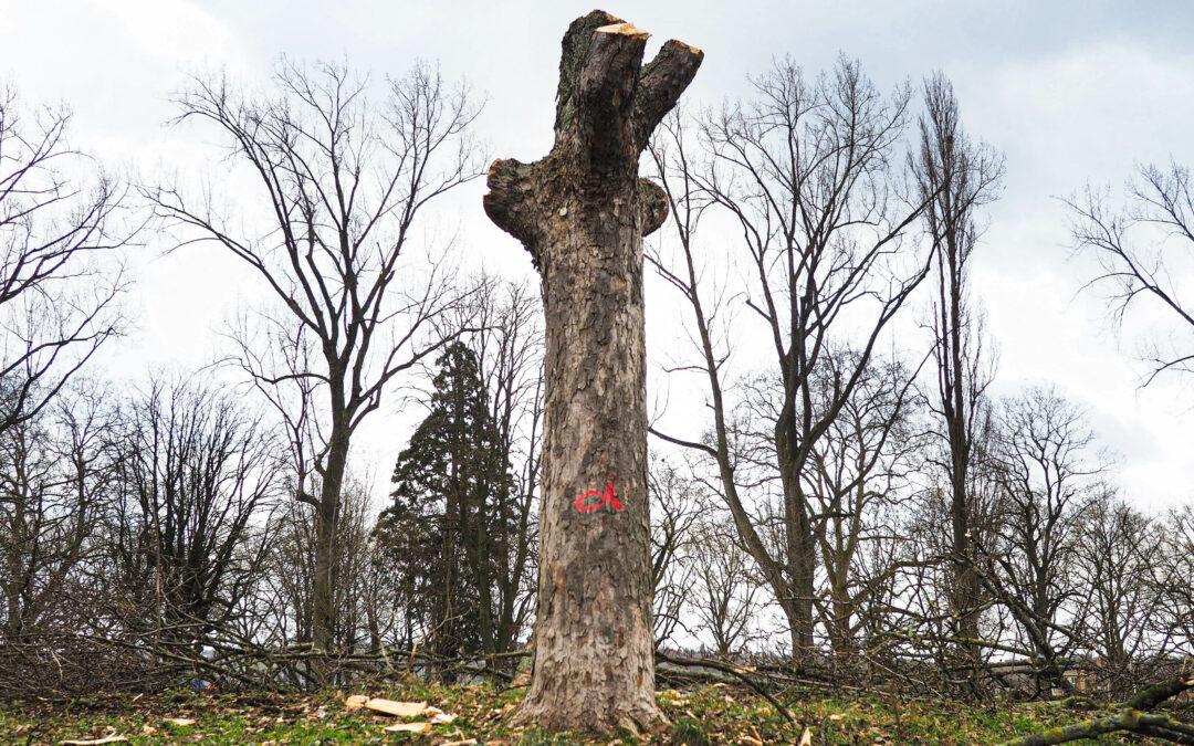 Abattre un arbre ou arracher une haie: il faudra désormais une autorisation communale