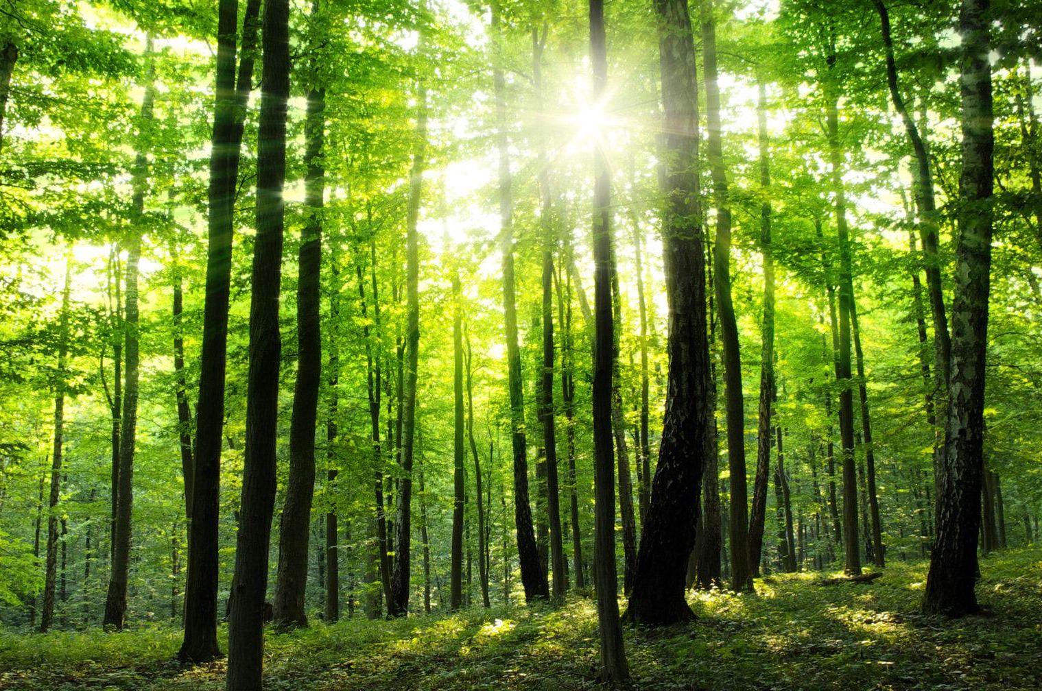 Seraing: une réserve naturelle dans le Bois de la Vecquée