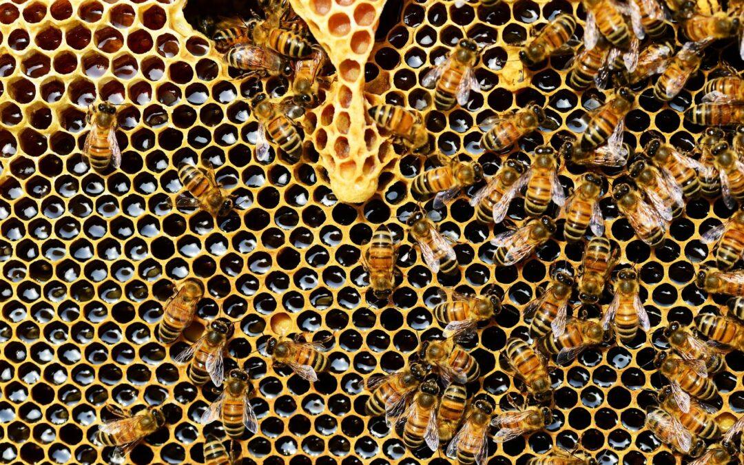 La Médiacité organise des ateliers sur les abeilles et fait gagner des pots de miel issus des ruches installées sur ses toits