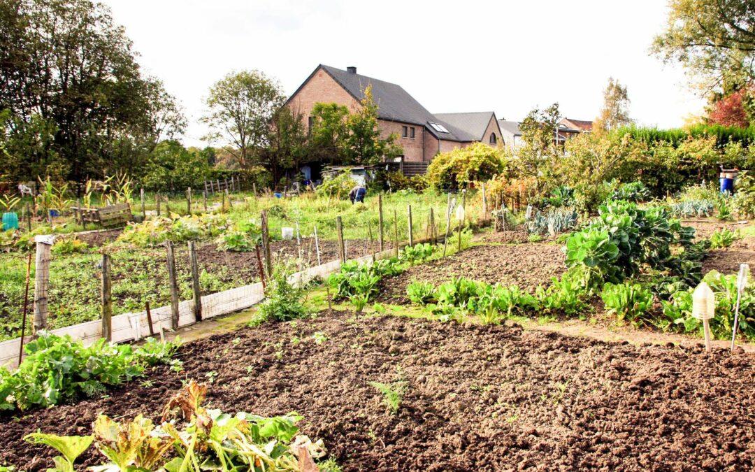 67 jardiniers du Thier-à-Liège sont expulsés par la Ville à cause de la pollution: ils ne veulent pas partir